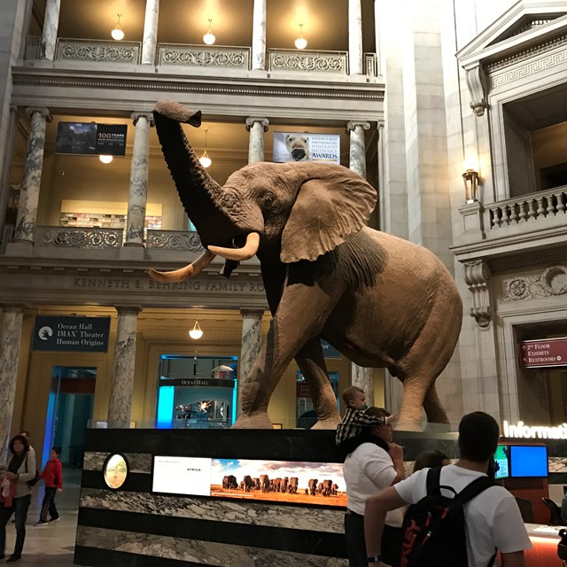 The National Museum of Natural History incorporates lessons about nature and wildlife. How interesting!