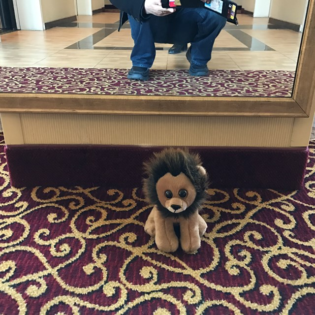Quick photo of our plushie friend in the hotel getting ready for the activities of the day.